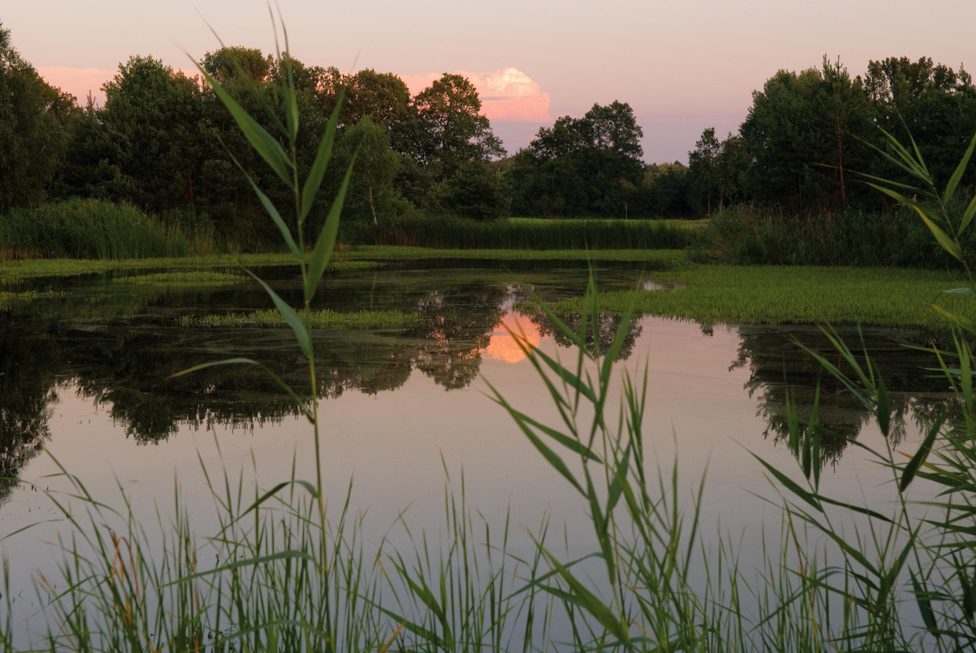 golfen am Abend in den Sonnenuntergang